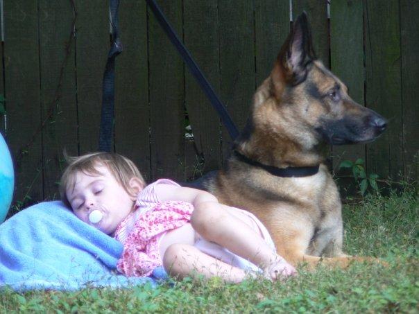 vigilant dog